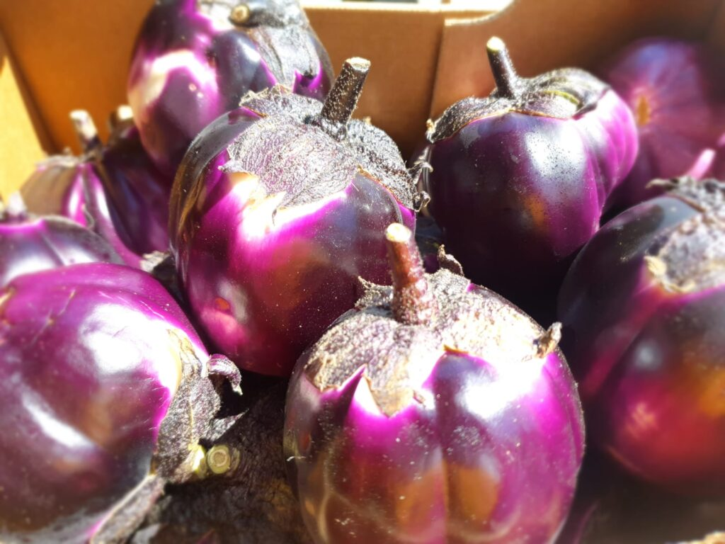Purple Round Aubergines from Dynamis